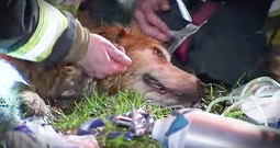 Firefighters Doing Everything To Save Dog Will Wow You