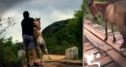 Baby Horse Trapped On A Bridge Gets Rescued Just In Time