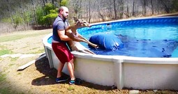 Deer That Fell Into A Pool Gets A Beautiful Rescue