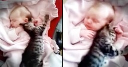This Baby And Kitten Snuggle Fest Is The Cutest