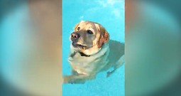 Funny Dog In A Pool Made My Day