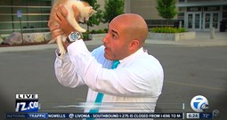Anchor Interrupted By A Stray Kitten Will Warm Your Heart