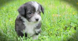 5 Precious Rescue Pups Feel Grass For The First Time
