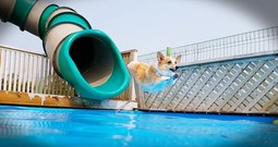 Corgi Pool Party Is My Favorite Summer Video