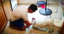 Dog's Adorable Prayer Before Dinner Is Too Cute