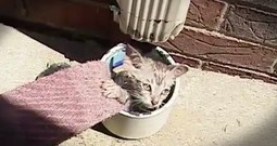 Tiny Kitten Stuck In An Air Vent Gets A Beautiful Rescue And A New Family