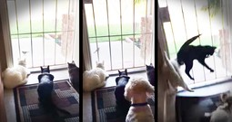 Cats Watching A Bird Get A Hilarious Surprise From The Family Dog