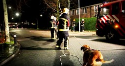 Firefighters Get Unexpected Help From One Determined Dog