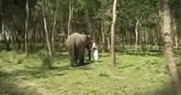 Elephant Comes Running When It Hears An Old Friend Call