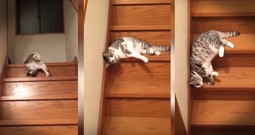 Kitty Slinky Takes Lazy To A Whole New And Extra Adorable Level