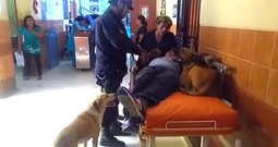 Injured Man is Rushed to Hospital While His Dogs Refuse to Leave His Side
