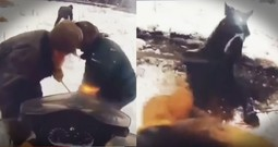 Horse Trapped In A Frozen Lake Gets A Dramatic Rescue