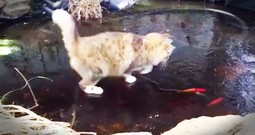 Cat Adorable Chases Fish Under A Frozen Pond