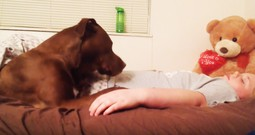 Watching This Service Dog Respond To A Call Is Amazing