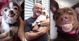 These 15 Dogs Are Cheesein' From Ear To Ear And It's Precious