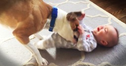 Baby Won't Stop Crying Until This Pup Jumps In To Help