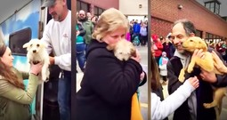 Don't Miss 57 Dogs Saved From Kill Shelters Meeting Their Furever Families