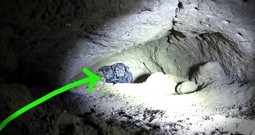 Risky Cave Rescue Of 9 Puppies Will Leave You On The Edge Of Your Seat