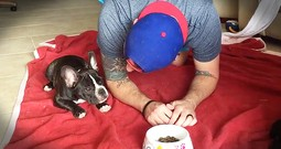 French Bulldog And Owner Adorably Pray Together Before Meals