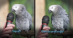 Talented Parrot Does Impressions Like You Won't Believe