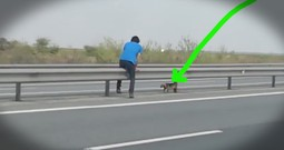 Dog's Terrifying Highway Rescue Gets The Sweetest Update