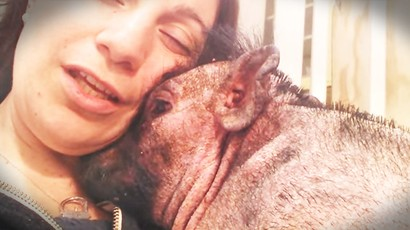 Woman Sings Down In The Valley To Pig In Hospital