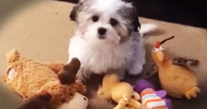 Puppy's Hilarious Response To Pizza Or Friendship Made Me LOL