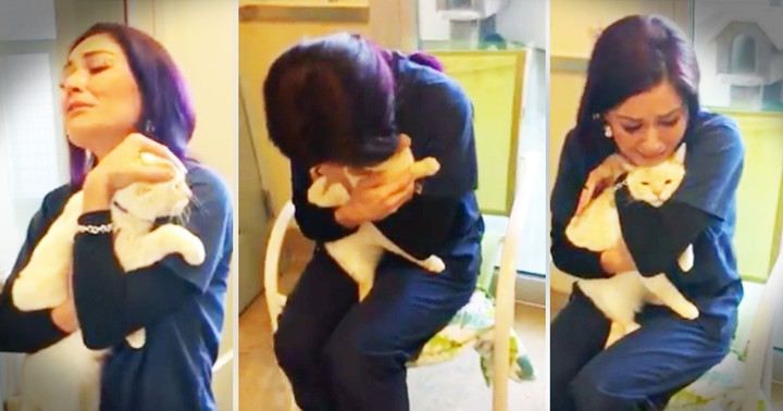 Woman Searches For 2 Years To Find Her Lost Cat And Gets This Incredible Reunion